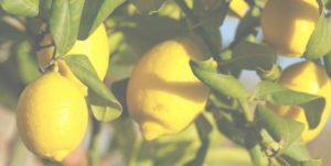 limoncello con limoni di sicilia